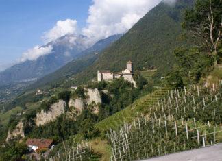 Pohled na hrad Tirol a okolní vinice