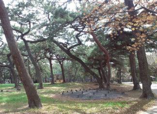 Borovicový park