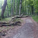 V přírodním parku Jasmund člověk nechává přírodě volnost