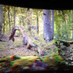 Expozice v Nationalpark-Zentrum Königsstuhl v parku Jasmund