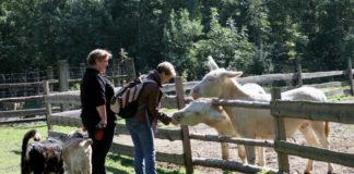 Krmení zvířat ve stepní zoo v Pamhagenu