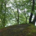 Staré bukové lesy v přírodním parku Jasmund